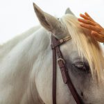 beautiful-horse-reiki-treatment