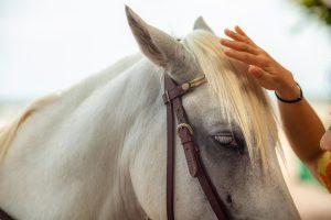 beautiful-horse-reiki-treatment