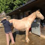 vt-equine-fascia-massage-1