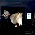 VT-Equine-Healing-Energy