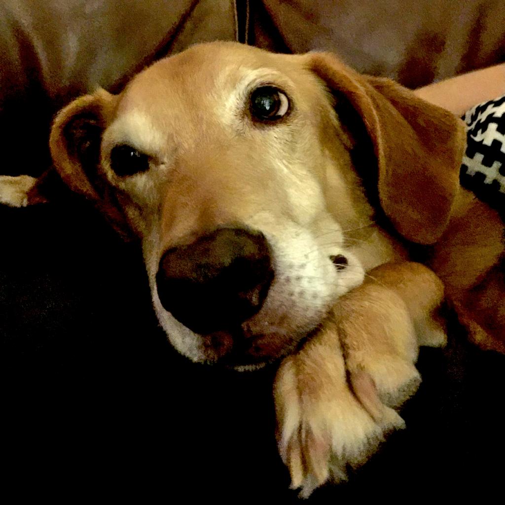 beautiful- spanish-rescue-dog