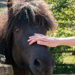 horse-healing