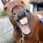 equine-massage-london-surrey