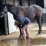 equine-touch-fascia-release