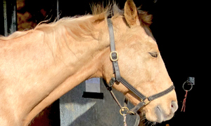 happy-equine-touch-horse