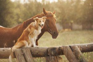 animal-healing-practitioner-surrey-london