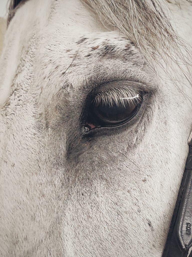 horse-healing-techniques-surrey