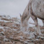 equine-massage
