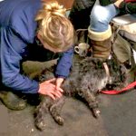 VT-Canine-Healing-Reiki