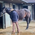 vt-equine-soft-release-fascia-massage-1