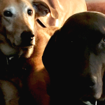 beautiful-doggies-leon-dolly