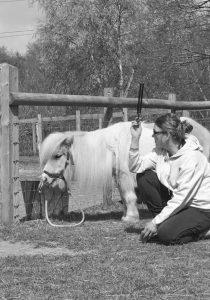 horse-dog-healing
